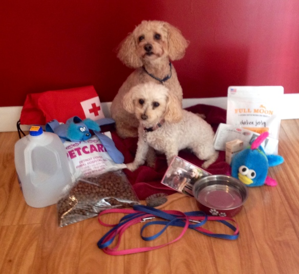Pictured beside Zack and Zoe are leashes, water, food, Vet information, dog toys, a towel, dog treats, medical history, medicine, current picture of Z&Z and a water bowl.