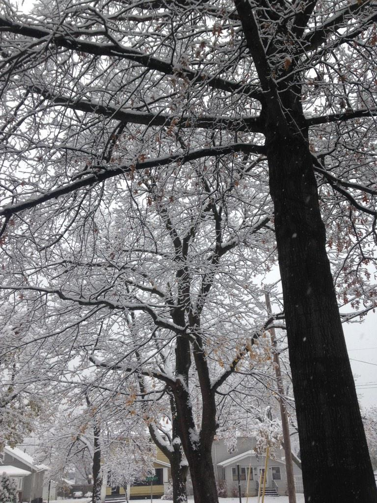 Freshly fallen snow on the trees (and power lines) of a Northeast Ohio neighborhood.