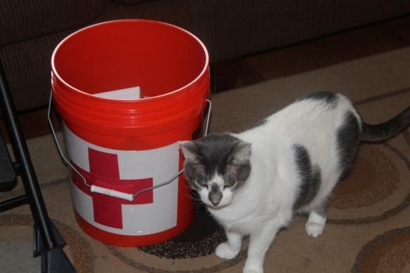 Red Cross Cat